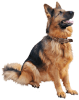 png-german-shepherd-download-1300